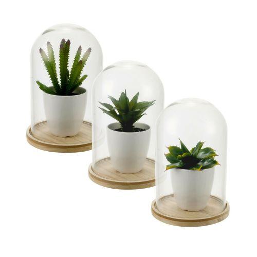 Decorative Artificial Plant Glass Dome Jar - 4 Types